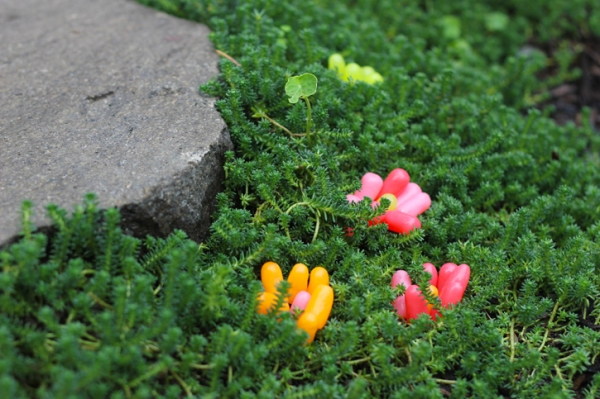 mike and ike flowers