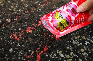 pop rocks seeds