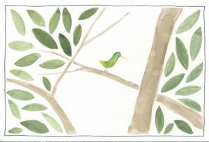 special bird in soberania national park