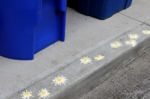 curb frosting daisies