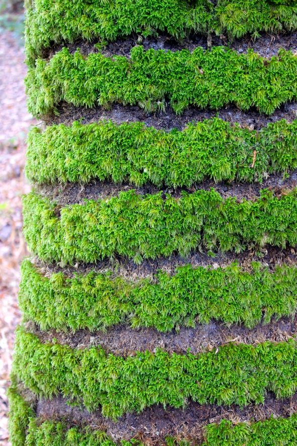 moss horizontal stripes