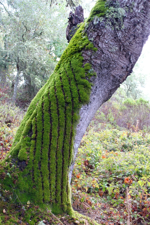 moss vertical stripes