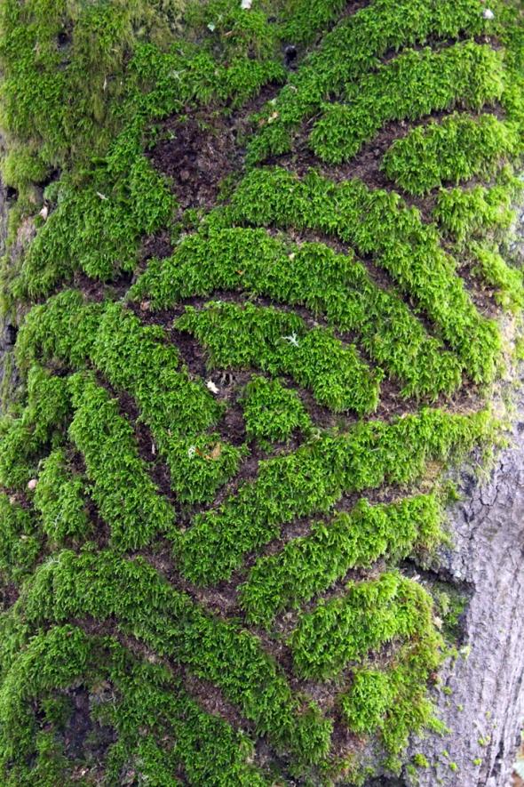 moss waves
