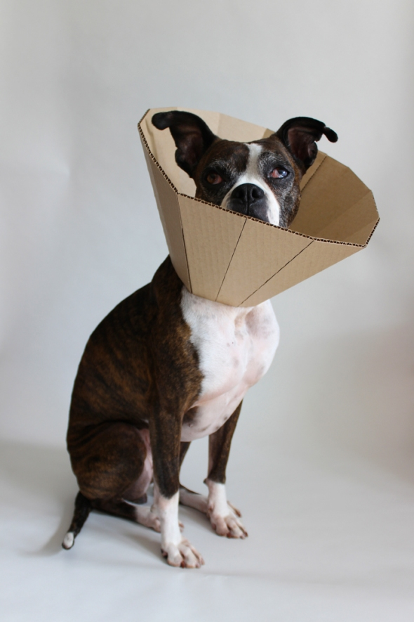 faceted cardboard elizabethan collar