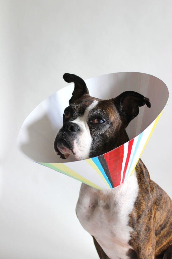 paul smith elizabethan collar