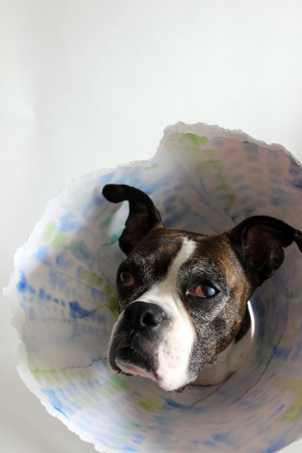watercolor elizabethan collar