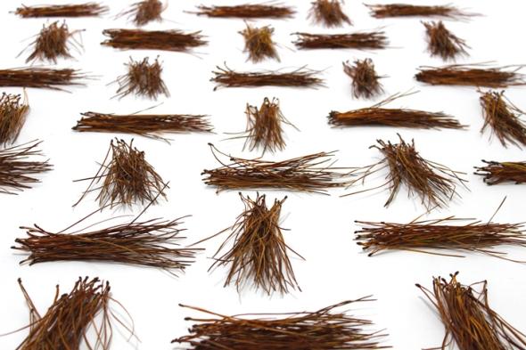 pine needle hyphens