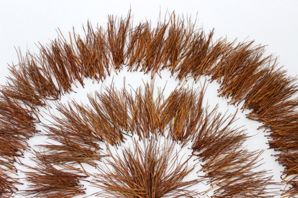 pine needle sunburst