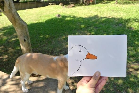 here little ducky
