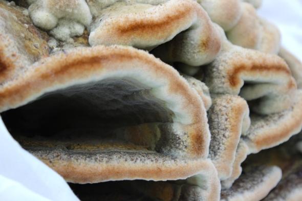 mushroom portraits