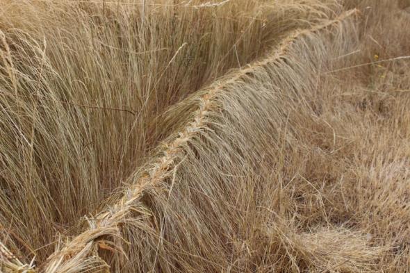 grass line