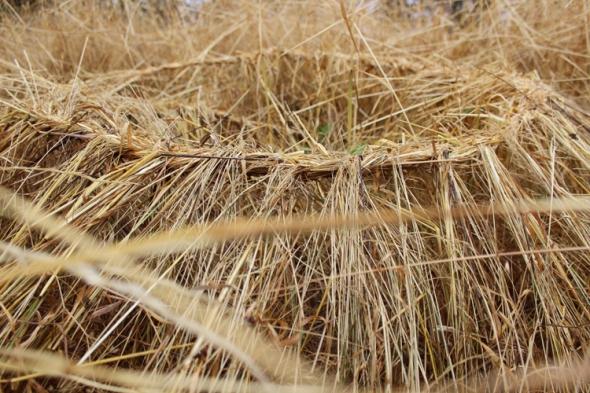 grass spiral
