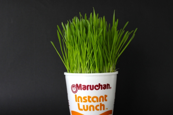 wheat grass ramen
