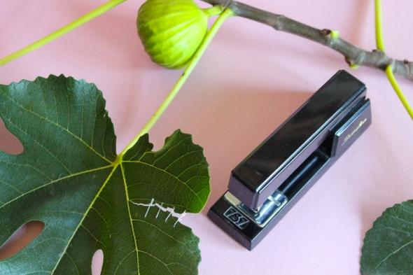 stapled leaf